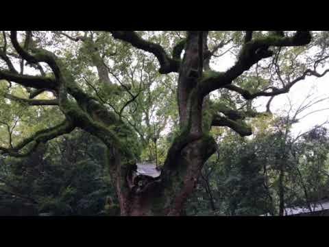亀凛蓬莱のインチキ!【ヒーリング動画】  スサノオの鶴如来