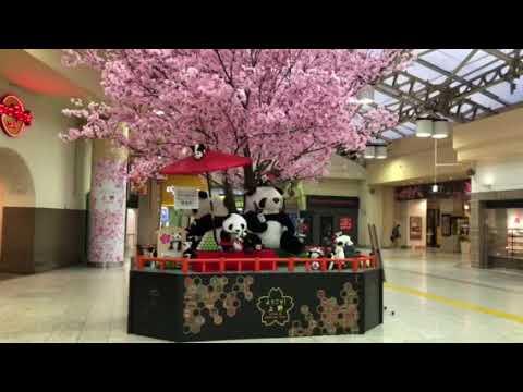 亀凛蓬莱のインチキ!【ヒーリング動画】  横槍宙尉  〜限界突破〜