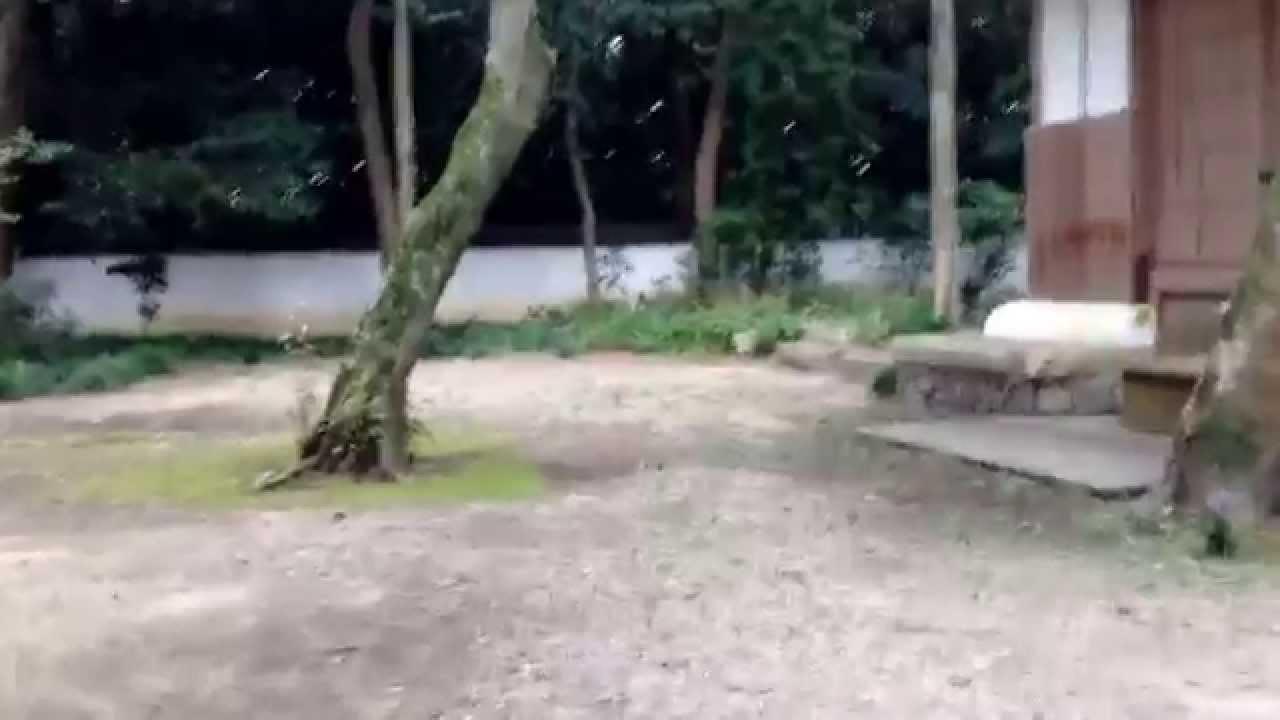 亀凛蓬莱のインチキ!【 ヒーリング動画 】 イザナギの幼名 〜名前の力〜